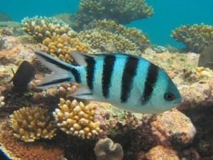 Onderwater wereld vakantie Bali