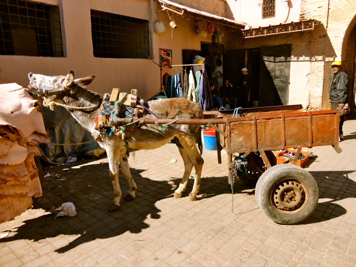 frans-leren-marokko